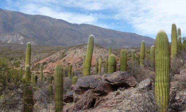 Amaicha del Valle – Argentina
