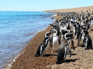Estancia-San-Lorenzo-penguin-colony-Peninsula-Valdes-(3)